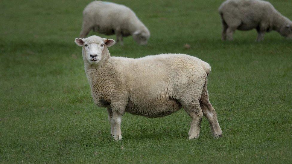 З'їсти тварину чи стати вегетаріанцем - нове телешоу. Огляд ЗМІ