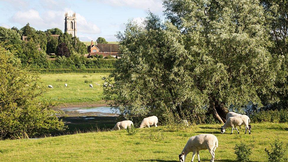 Paisaje natural en el condado de Wiltshire, en Reino Unido.