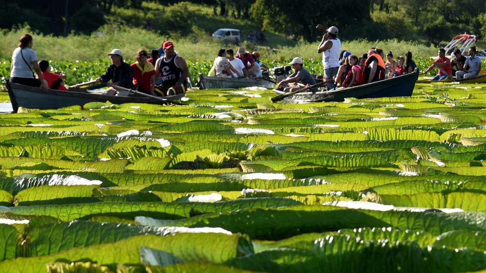 People take boats to see giant water lilies near Salado River, 25km north of the capital Asunción.