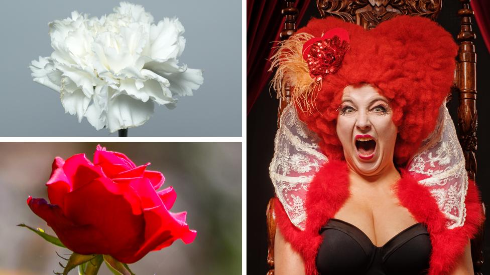 Clavel blanco, rosa roja, reina de corazones enojada.