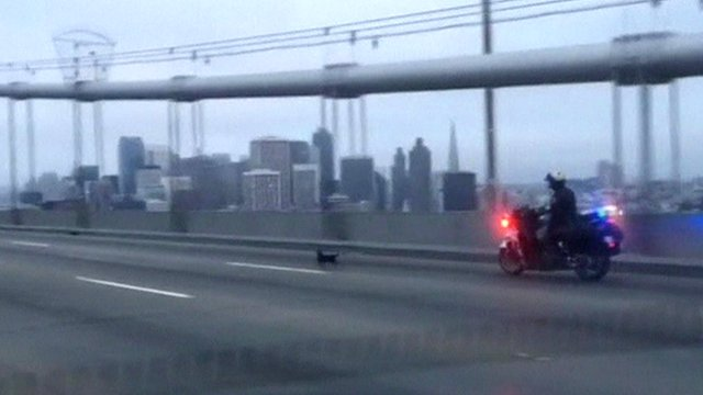 California Highway Patrol motorbike chasing dog