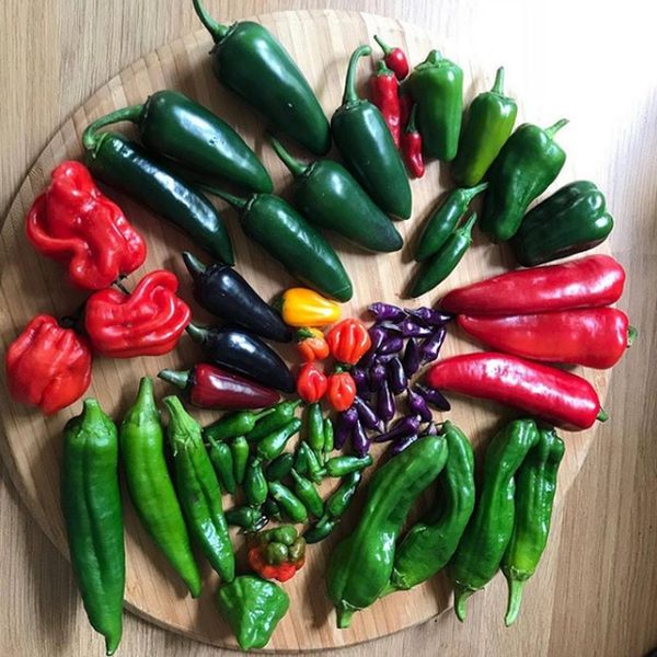 A collection of chillies