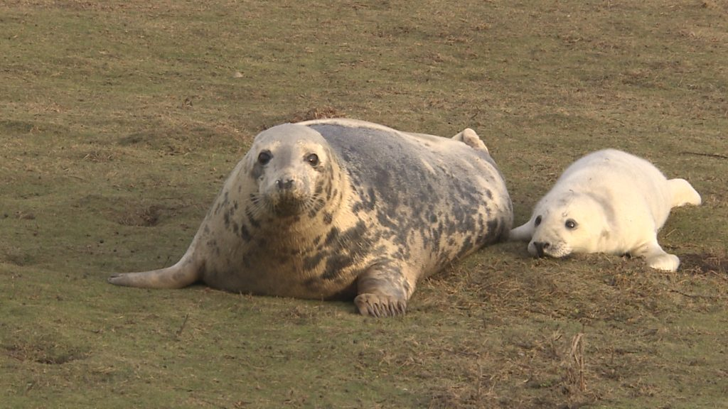 Seal pups across the UK are 'at risk from toxic chemicals'