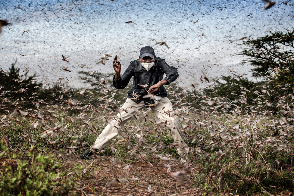 Man surrounded by a swarm of locusts