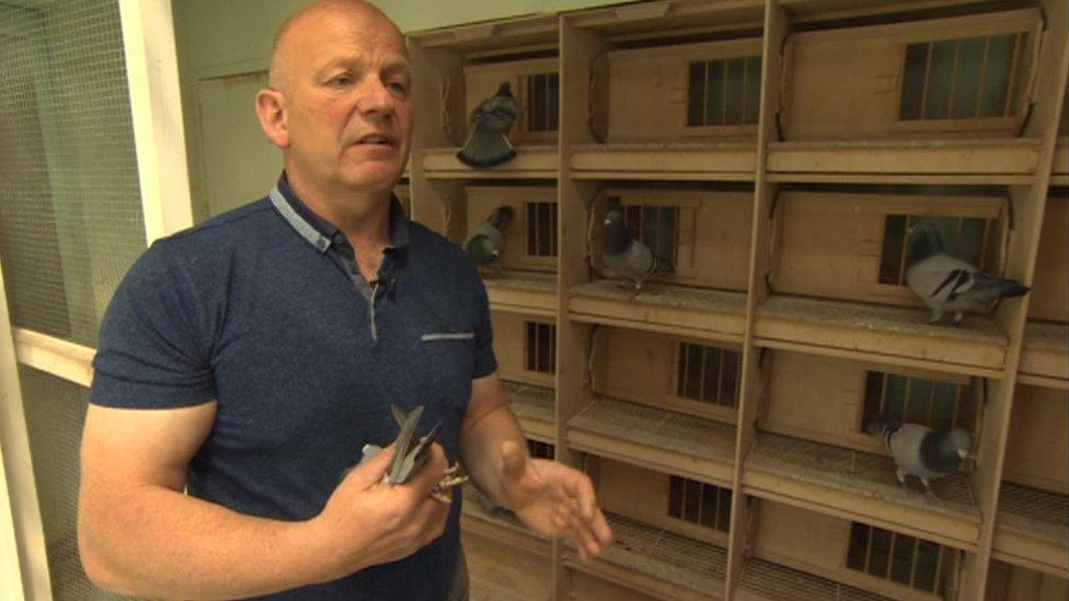 Pigeon fancier Simon Schofield