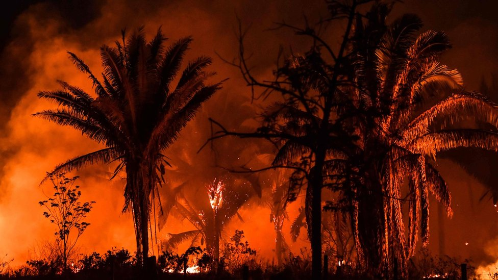Požari u Amazonu obeležili su 2019. godinu