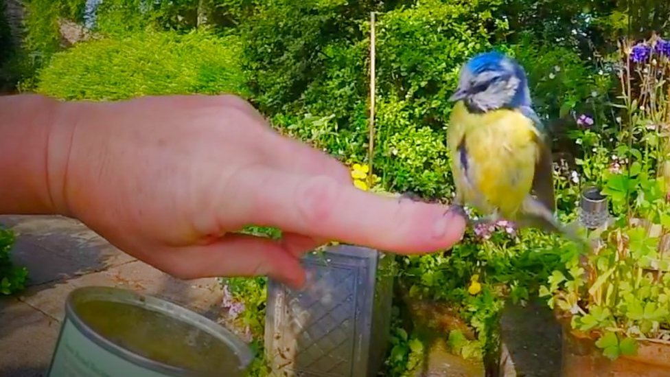 'Photographic Banksy' footage shows 'one-in-a-million' blue tit