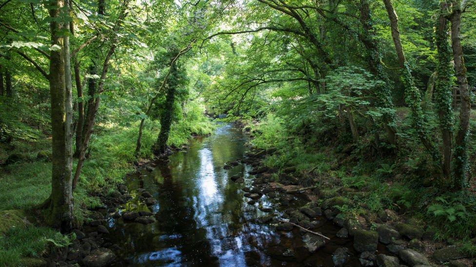 River Teign near Chagford on Dartmoor