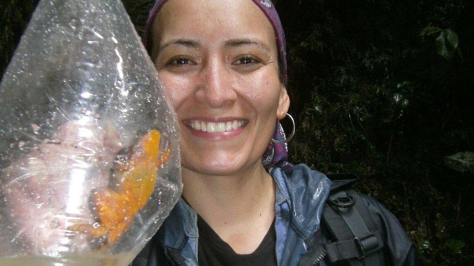 Teresa Camacho Badani muestra una de las ranas capturadas