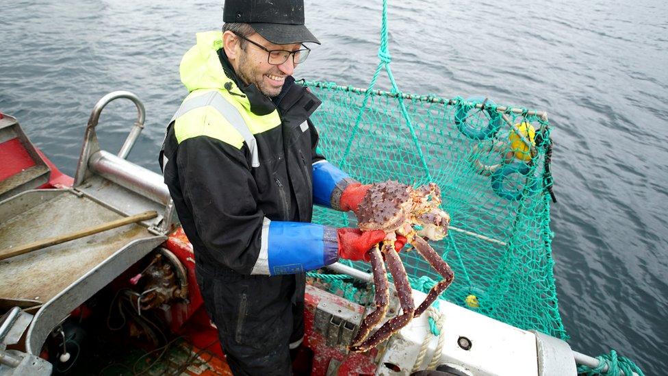 Einar Julissen arrastra una canasta de grandes cangrejos en el fiordo de Repparfjord.