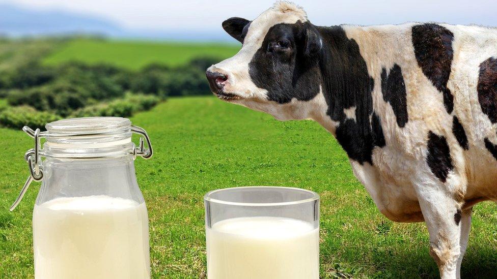Чем отличается органическое молоко от обычного?