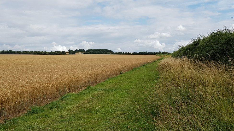 The Roman Road and Fleam Dyke