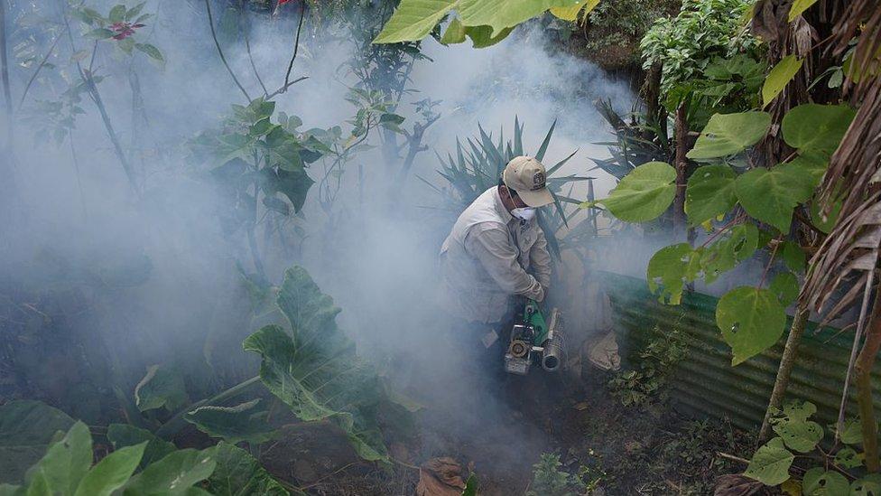Fumigación contra el mosquito Aedes aegypti