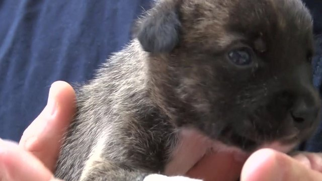A puppy at a vet's clinic in Greece