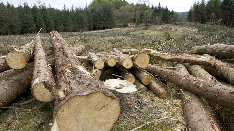Logs in Argyll Forest