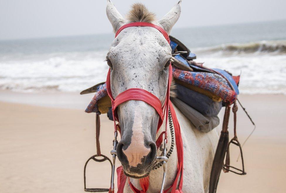 konj gleda u kameru
