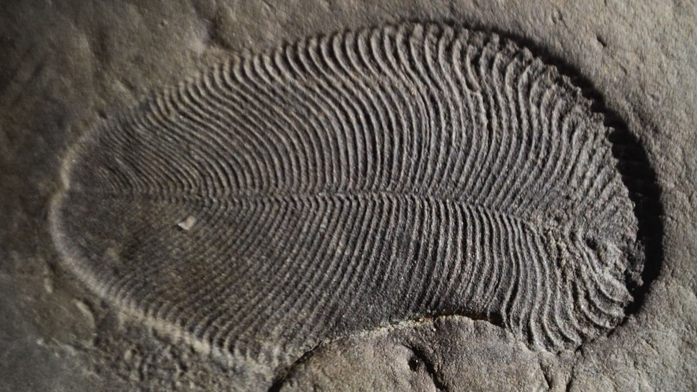 Earliest animal fossils are identified