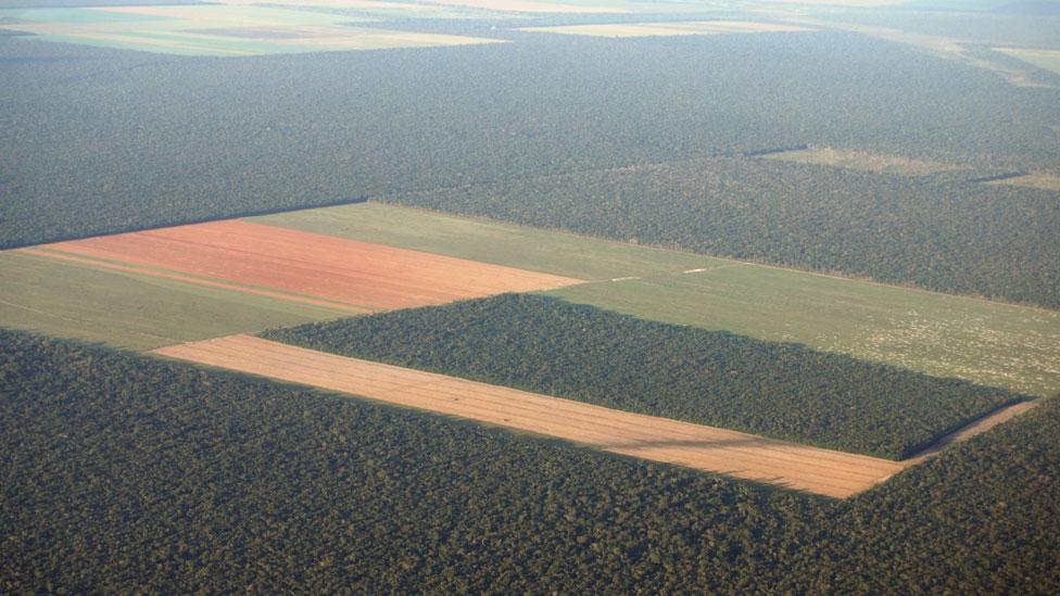 Tierra desforestada en Brasil