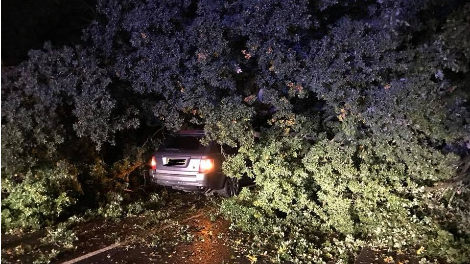 Driver who survived tree fall told 'buy lottery ticket'
