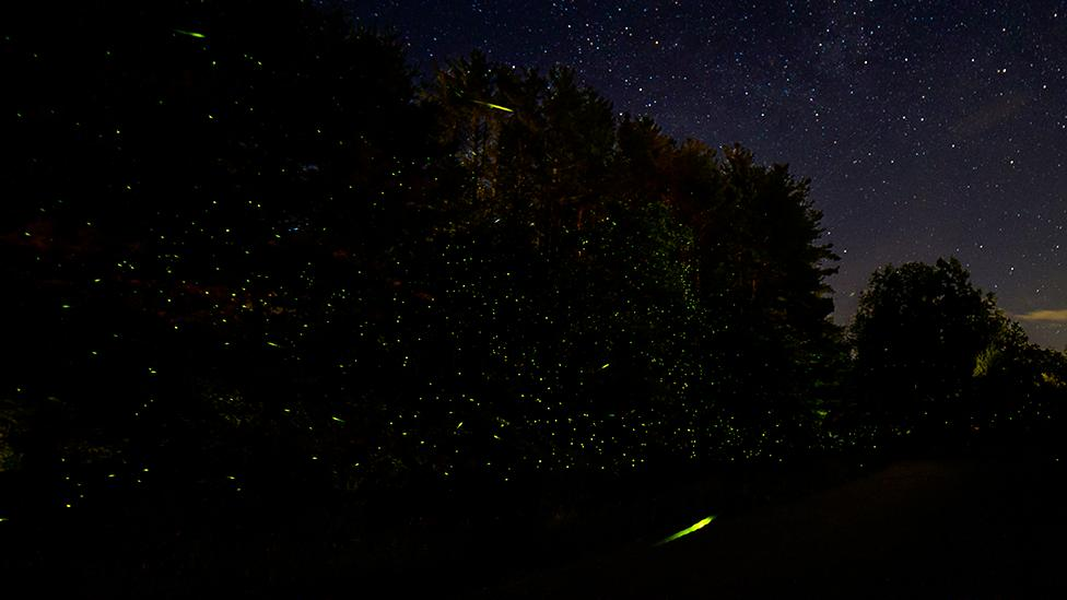 Carla Rhodes is a wildlife conservation photographer who has snapped fireflies in the Catskill Mountains in New York, US