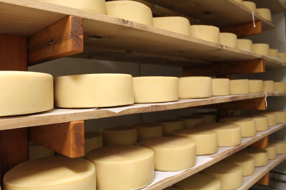 Cheese being matured