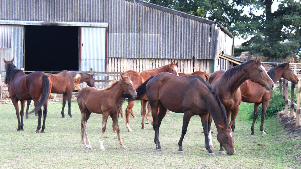 Pregnant horses and foal rescued from slaughter in Norfolk