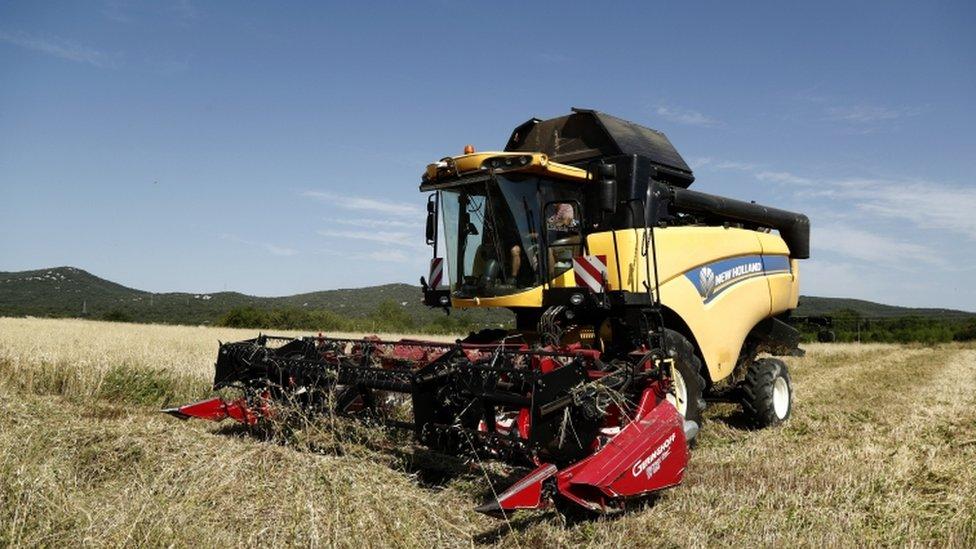 Tractor cosechando trigo en un campo