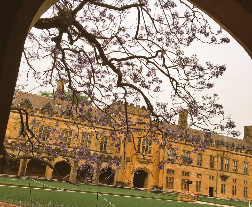 Sydney University's jacaranda tree just hours before it collapsed. (31 Oct 2016)