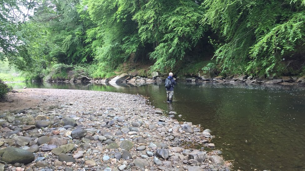 Salmon fishing: Bid to protect stocks in Faughan River
