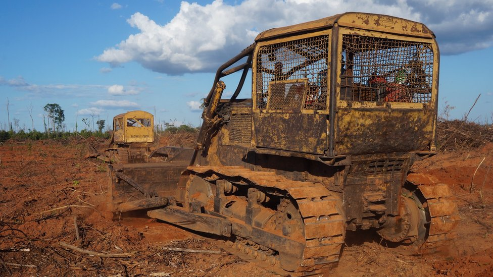 Bulldozers felling rainforest in Brazil's rainforest (July 2015)