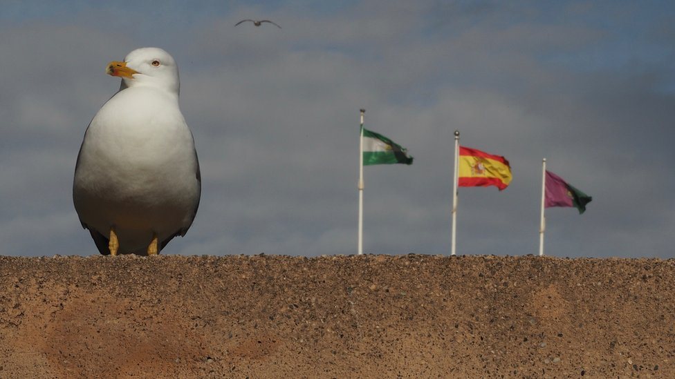 Seagull and flags