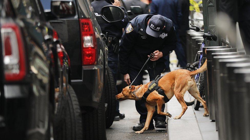 policija i pas, istraga