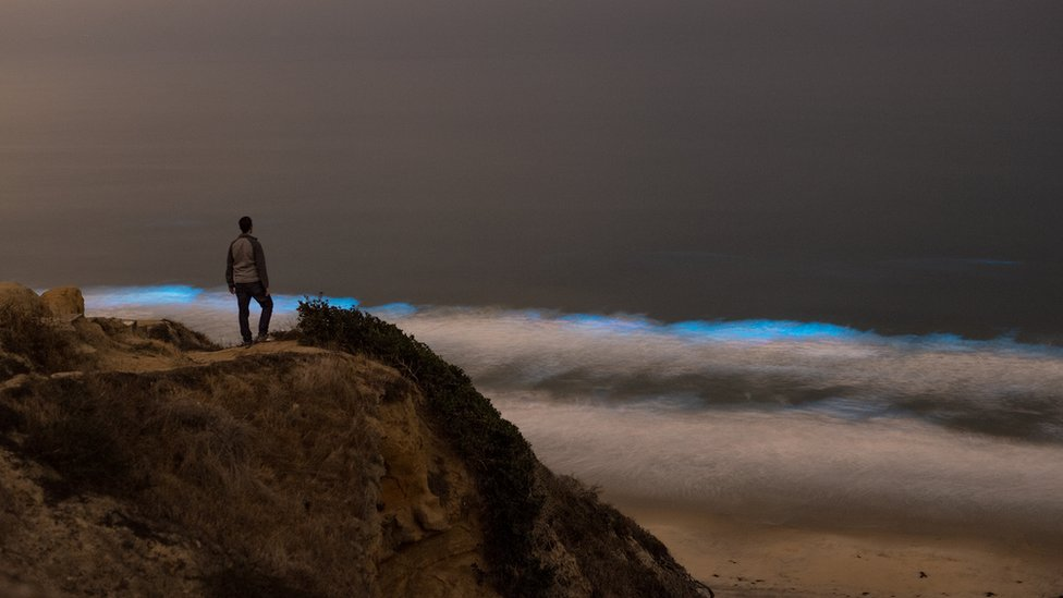 """""""It's pretty incredible to see bioluminescence in person, but it can be surprisingly easy to miss!"""" photographer Jack Fusco explained. He captured this observer on a vantage point"""