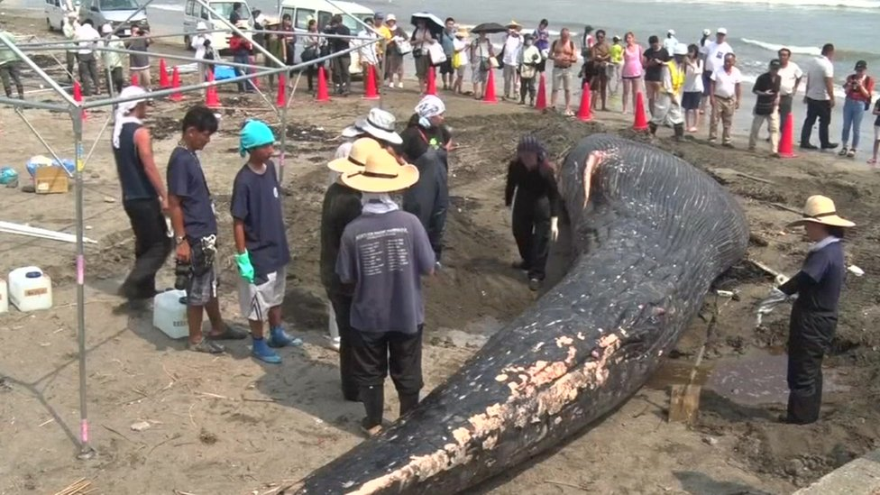 A baby blue whale lies surrounded by people on a beach in Kamakura, a city 70 kilometres (43 miles) south of Tokyo, on Japan's southern coast on 4 August 2018.