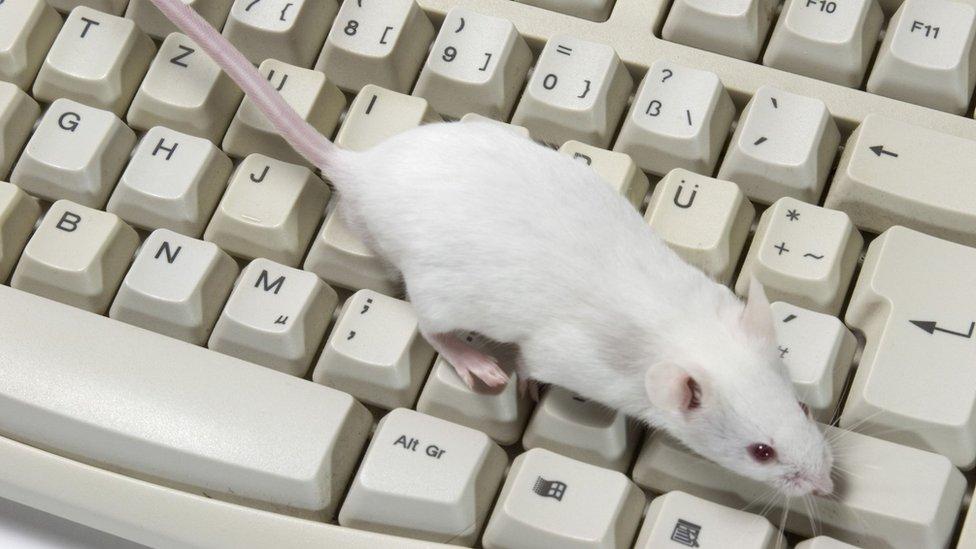 يراهن الباحثون على قدرة الفأر على سماع اختلالات الصوت التي لا يمكن للأذن البشرية سماعها