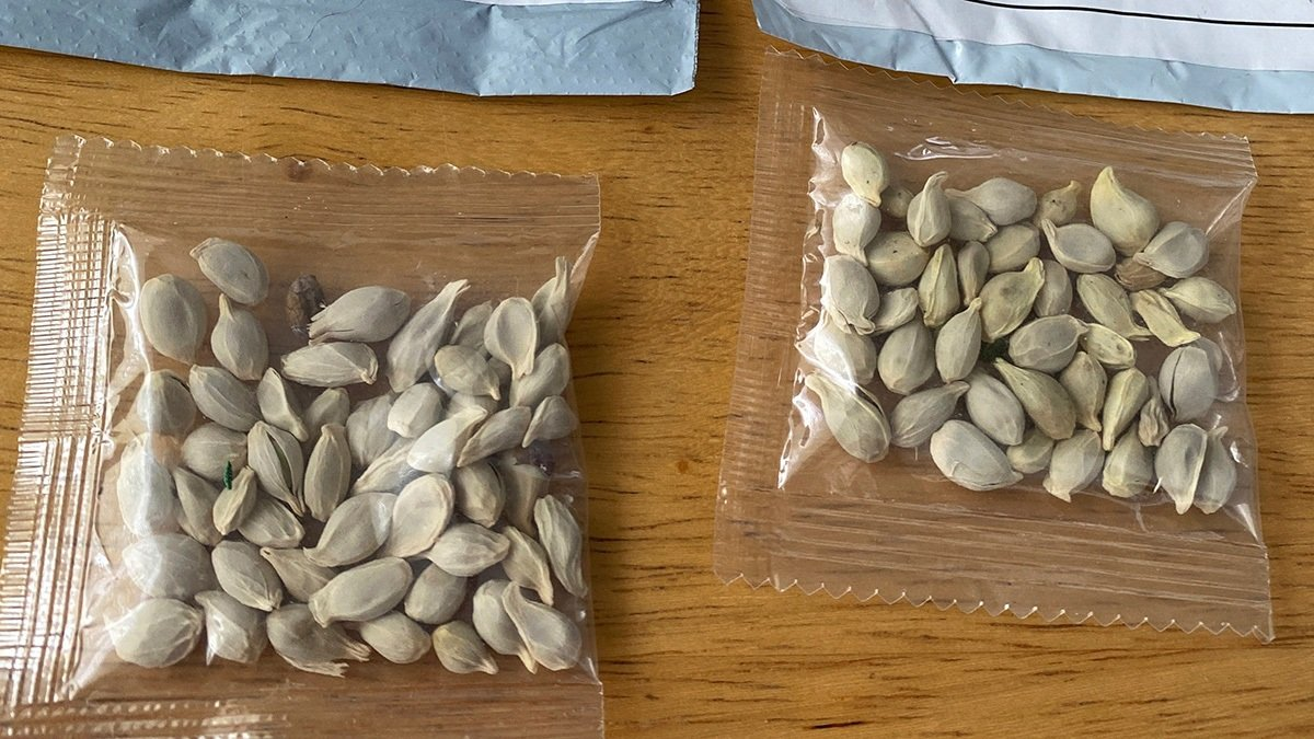 這些種子被通過普通郵政包裹的形式寄送。