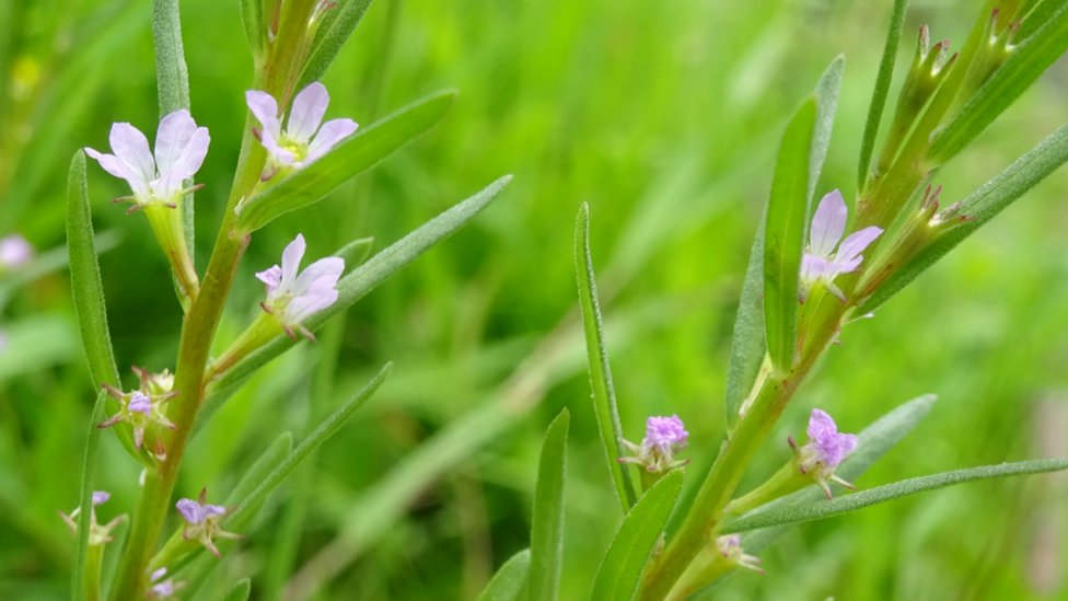 Grass-poly