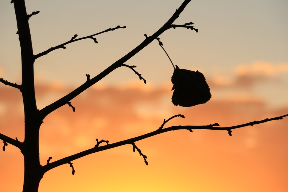 The silhouette of a leaf against an autumnal sky