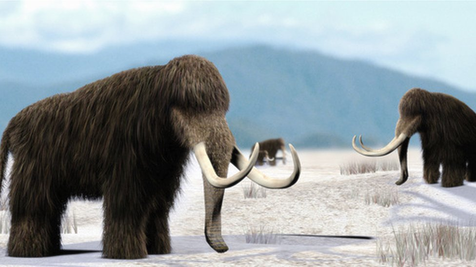 Found woolly alive mammoth Woolly Mammoth