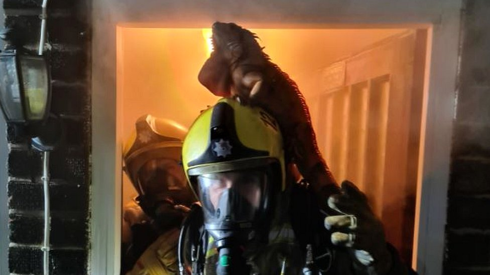 Iguana on a firefighter's head
