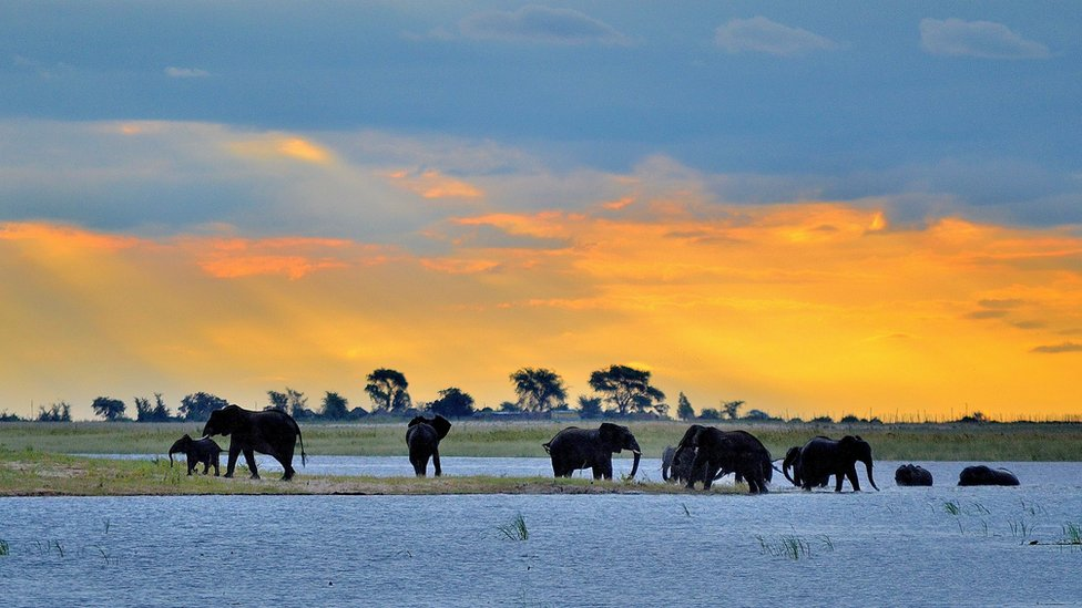 Elephants bathing in Chobe National Park