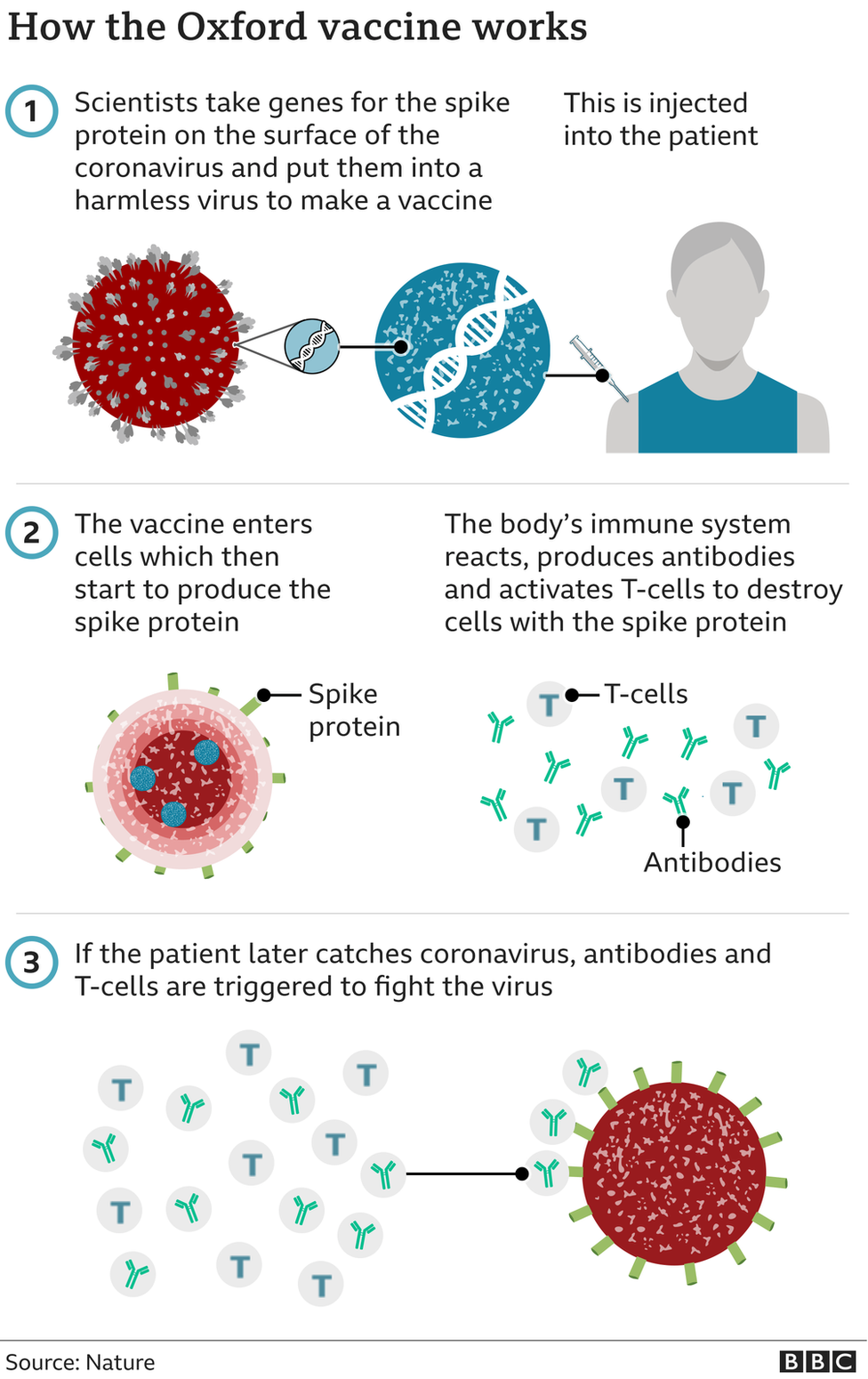 Graphic showing how the Oxford vaccine works