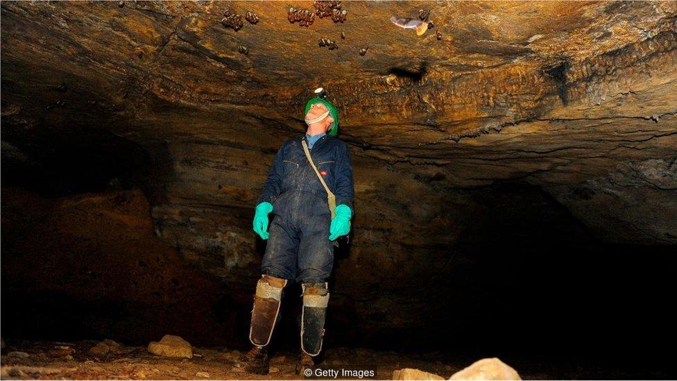 Bir mağara ve içinde yaşayan yarasalar