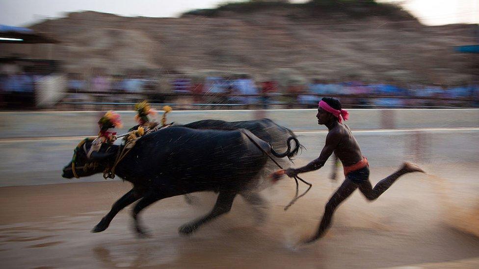 Una carrera de kambala