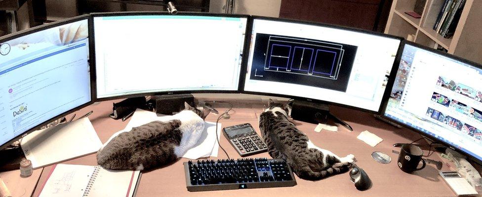cats and 4 computer monitors