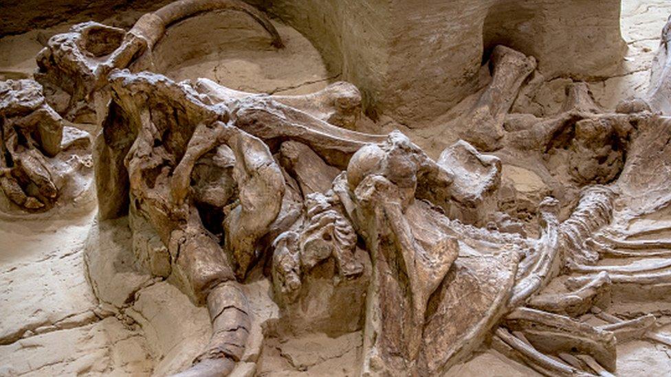 Huesos de mamut
