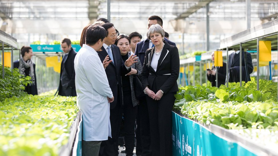 British Prime Minister Theresa May talks with employees as she walks through a greenhouse full of lettuce at the Agrigarden research and development centre in Beijing, China
