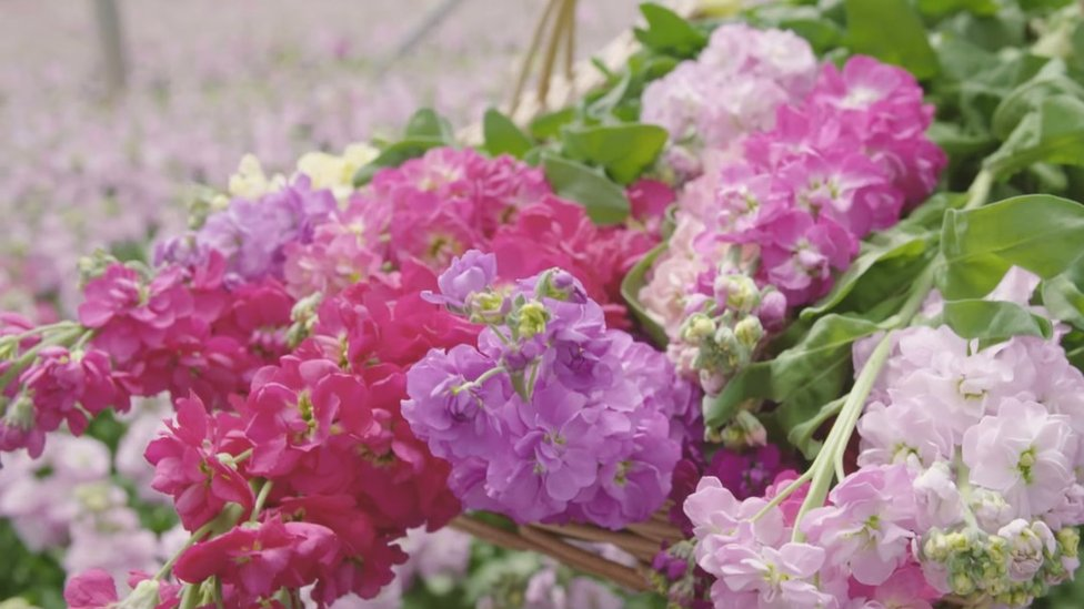 Cut flowers in basket