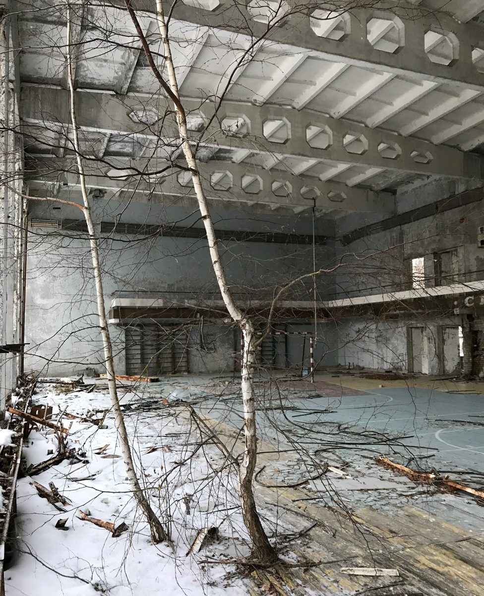 Birch trees growing in a large hall
