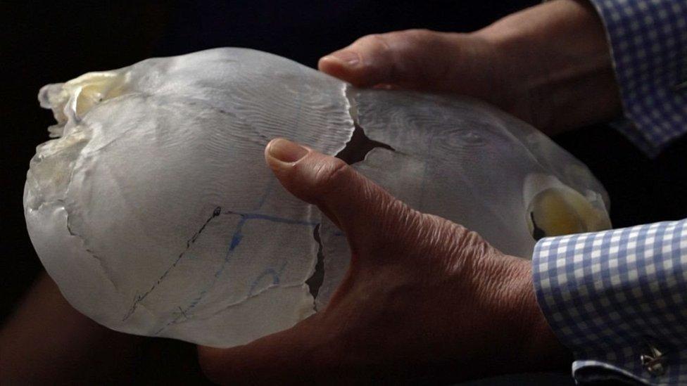 modelo de cráneo